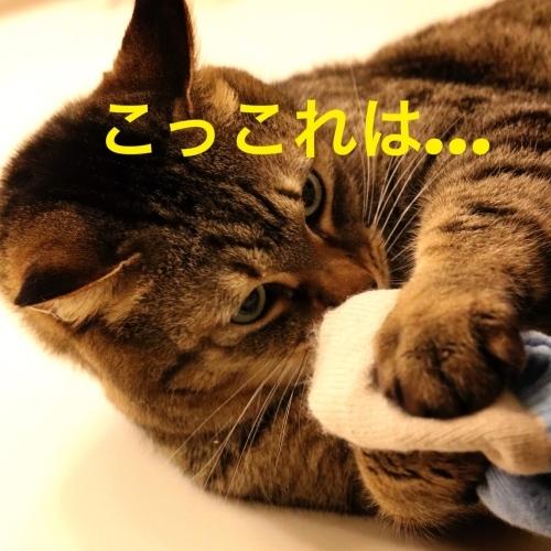 にゃんこ劇場「フィーバーニャイト」_c0366722_21581619.jpg