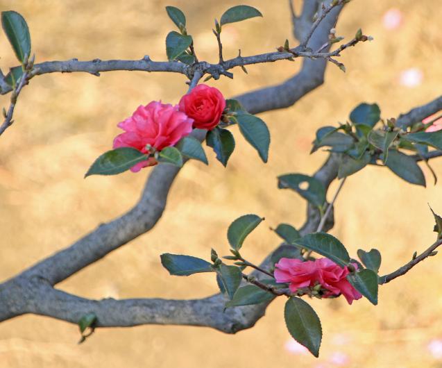 春のトップランナー_c0104227_16505371.jpg