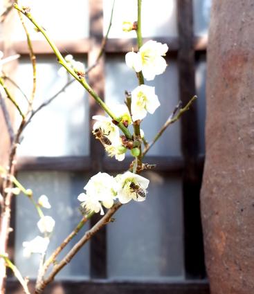 3月のヨガと夜カフェのお知らせ_b0237338_08241274.jpg