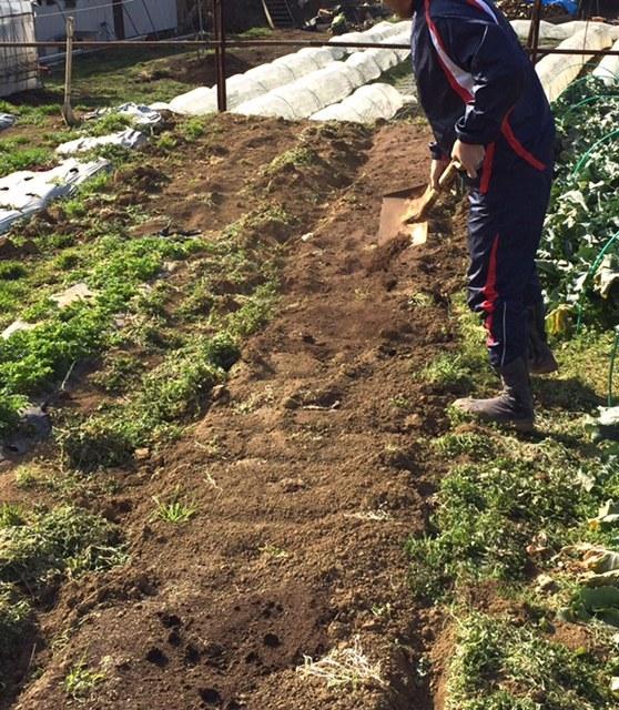エンドウ豆の櫓作り&ネット張り中 じゃがいもの畝作りです_c0222448_16043977.jpg