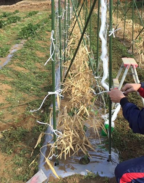 エンドウ豆の櫓作り&ネット張り中 じゃがいもの畝作りです_c0222448_16045742.jpg