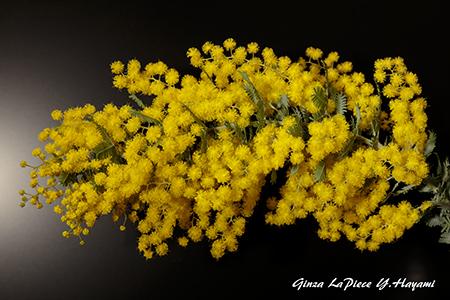 花のある風景 黄色のミモザ_b0133053_01041427.jpg