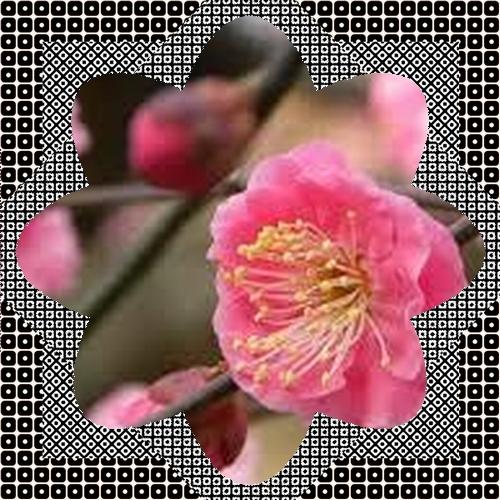 b0045259_6251416.jpg