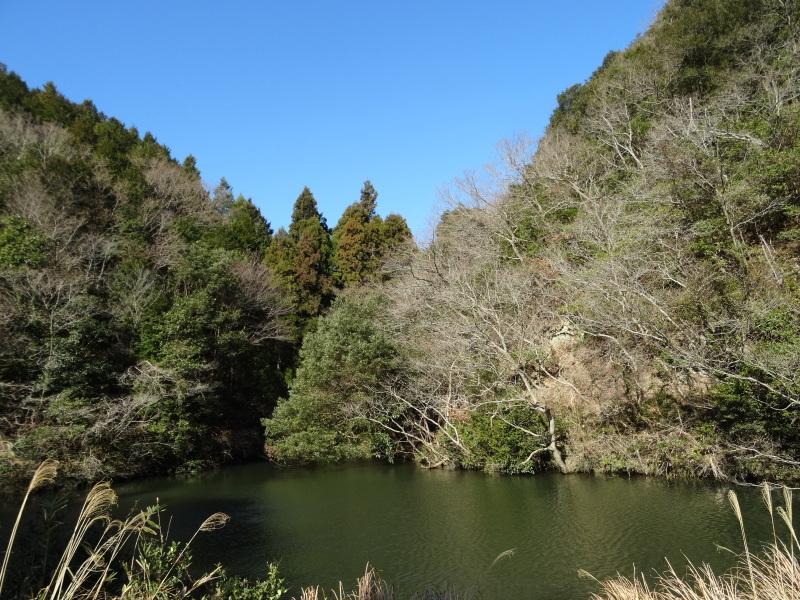 ソバノキの伐採・・・孝子の森_c0108460_20510178.jpg