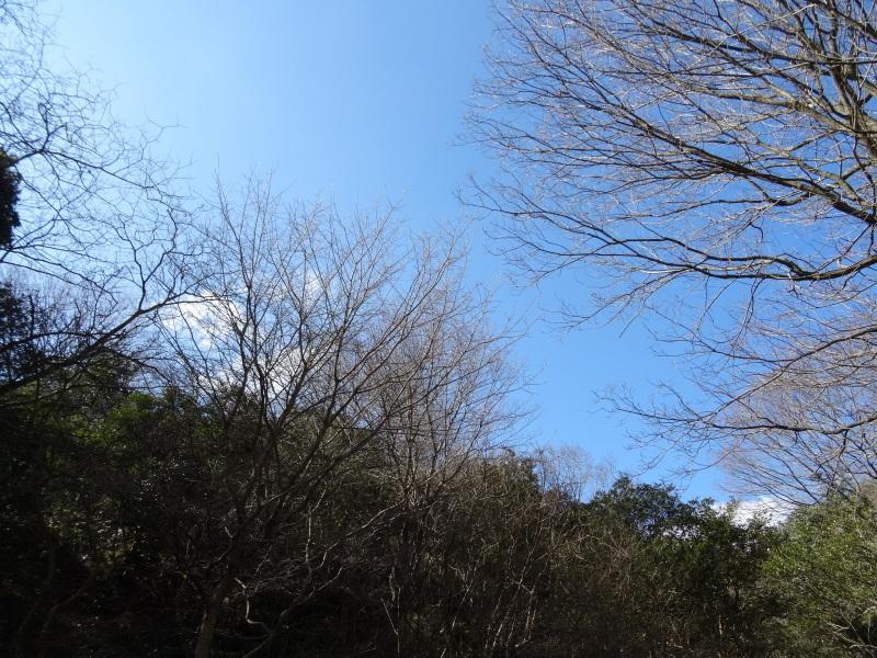 ソバノキの伐採・・・孝子の森_c0108460_20515306.jpg