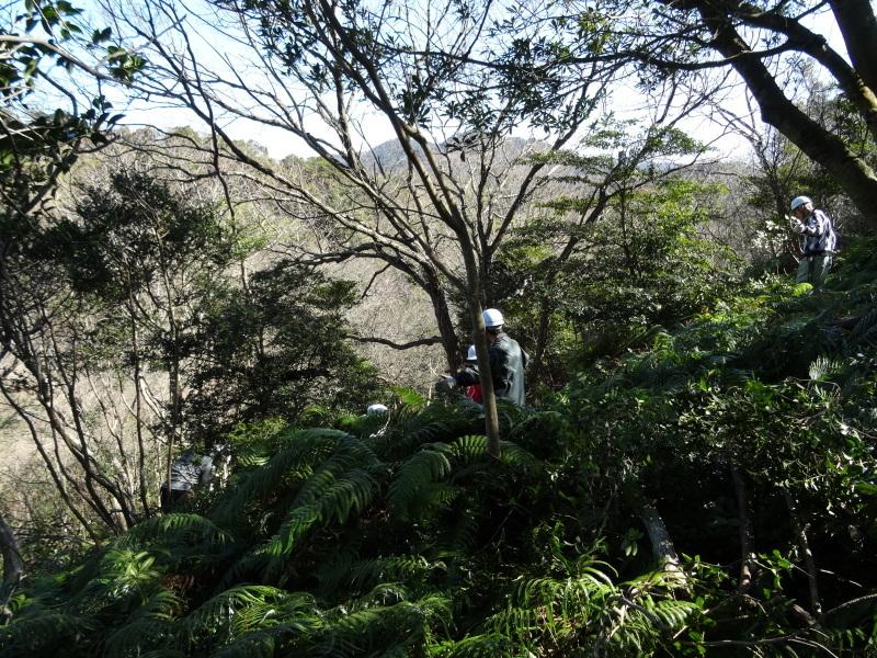 ソバノキの伐採・・・孝子の森_c0108460_20515670.jpg