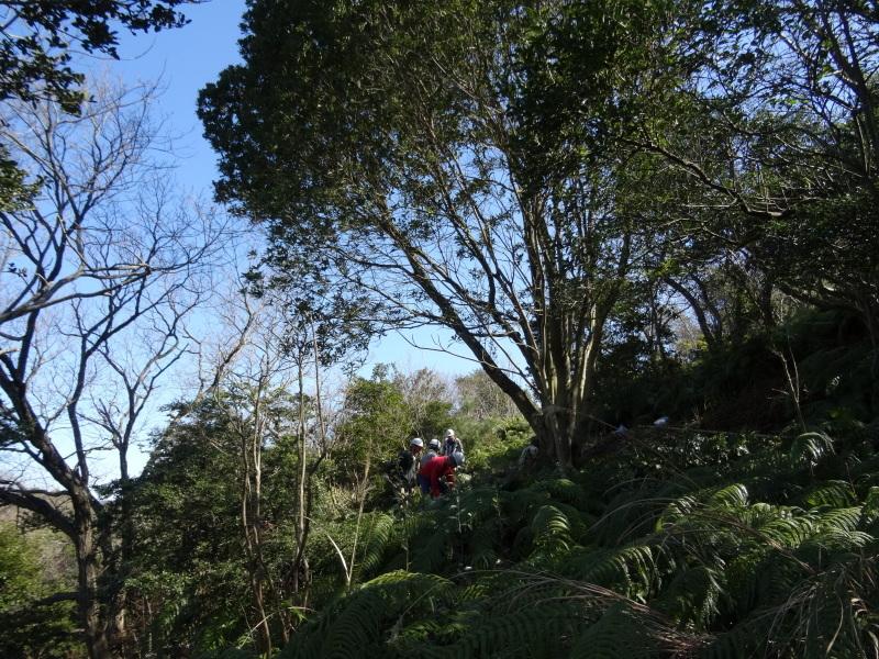 ソバノキの伐採・・・孝子の森_c0108460_20531350.jpg
