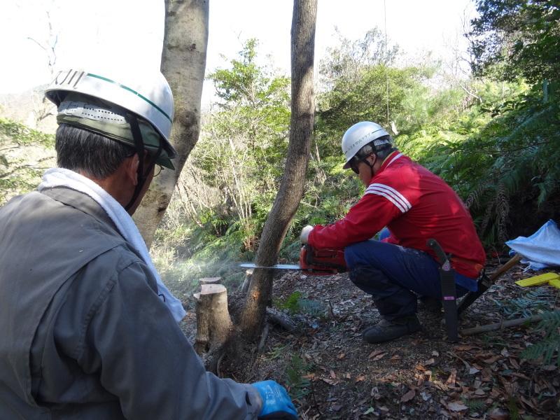 ソバノキの伐採・・・孝子の森_c0108460_20540049.jpg