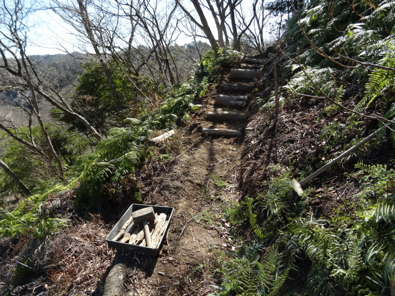 ソバノキの伐採・・・孝子の森_c0108460_20545141.jpg