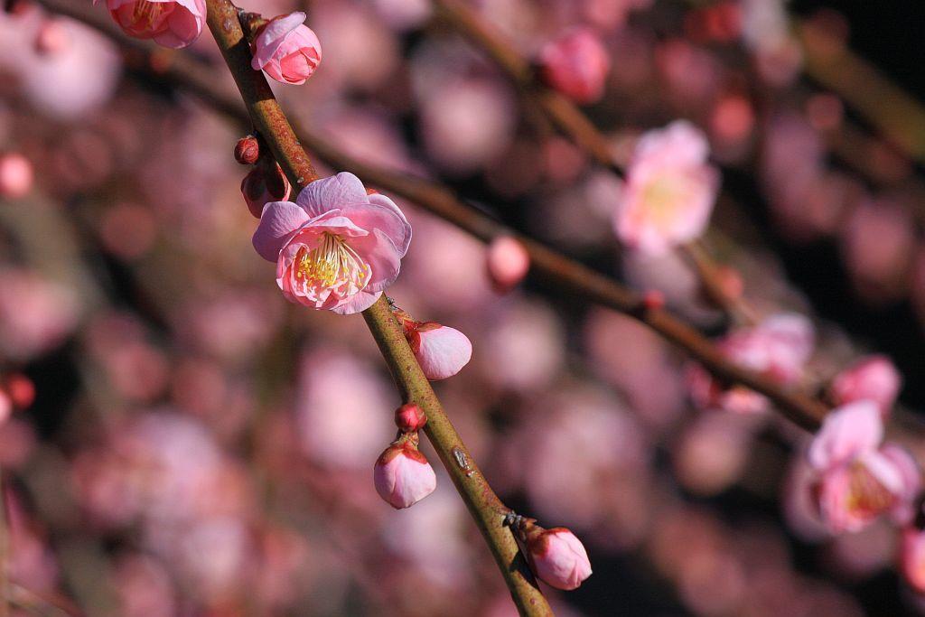 季節感と美意識_e0220163_18222804.jpg