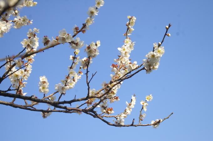 弥生3月、冬去りなば春遠からじ_a0111271_09190737.jpg