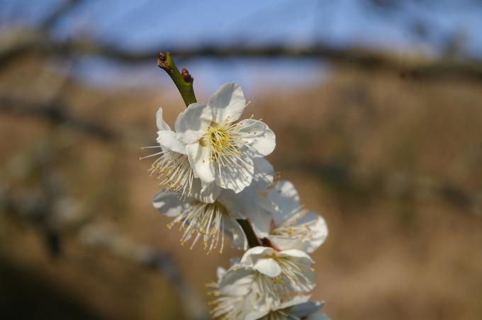 弥生3月、冬去りなば春遠からじ_a0111271_09214961.jpg