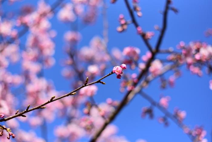 3月のお休みのお知らせ_a0312086_11433995.jpg