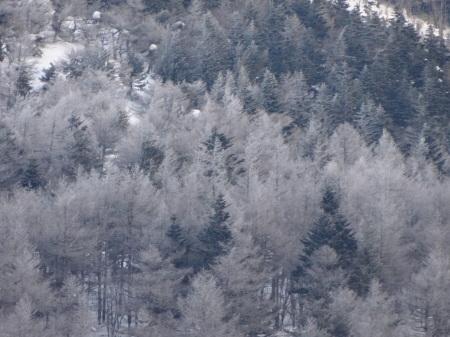霧氷の朝_e0120896_07212638.jpg