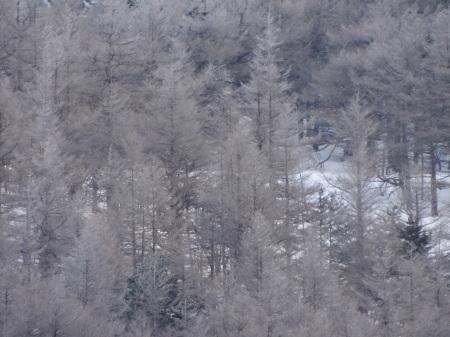 霧氷の朝_e0120896_07214423.jpg