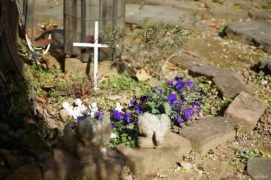 わたしの庭  * ひみつの花園_c0203401_14305513.jpg