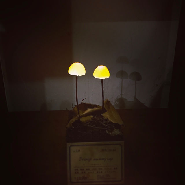 きのこランプの高野幸雄さんの個展へ行ってきました。_d0014014_0405453.jpg