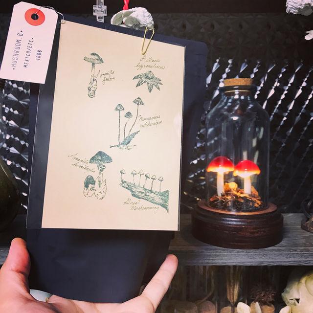 きのこランプの高野幸雄さんの個展へ行ってきました。_d0014014_043542.jpg