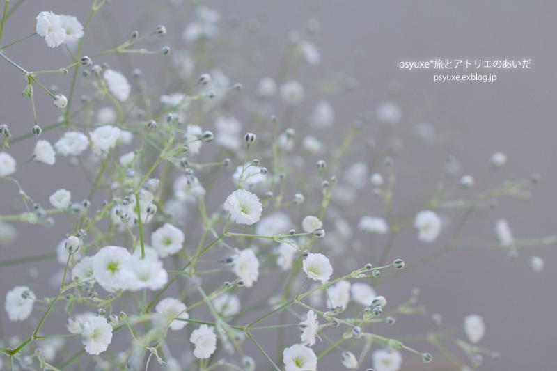 Flower Photograph #5_e0131432_19385984.jpg
