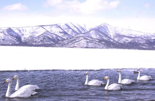白鳥の湖  3月1日_f0113639_1924854.jpg