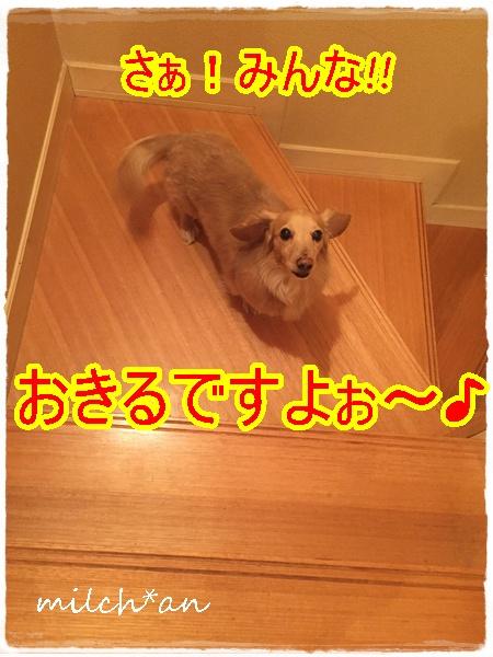 b0115642_7253681.jpg