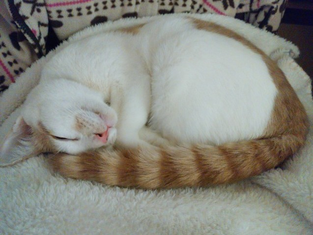 猫ブーム_e0367571_10554237.jpg
