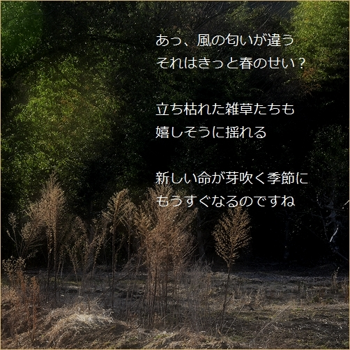 b0154475_15390568.jpg