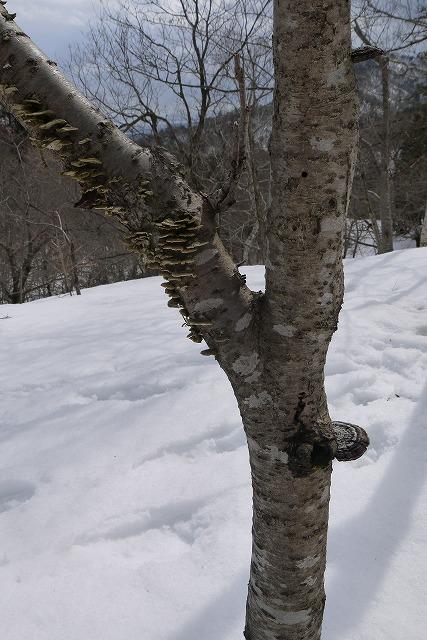 雪のマキノ高原へ_a0233896_1723917.jpg