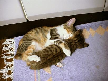 猫の日ミルクさん祭【3/2写真追加】_a0028451_20244609.jpg
