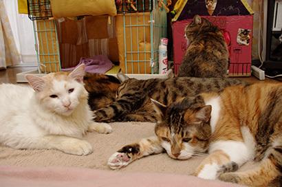 猫の日ミルクさん祭【3/2写真追加】_a0028451_20244652.jpg