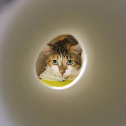猫の日ミルクさん祭【3/2写真追加】_a0028451_20244687.jpg