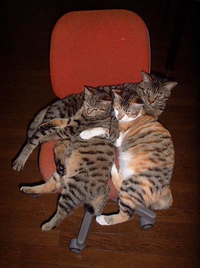 猫の日ミルクさん祭【3/2写真追加】_a0028451_20244690.jpg