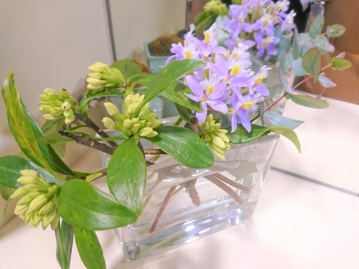 今週のお花は???_a0272765_17531639.jpg