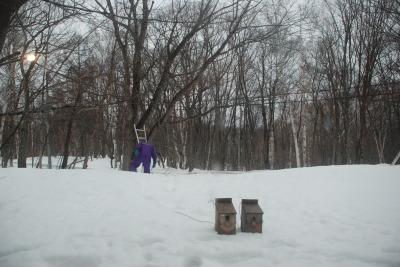 3月3日 金曜日  小雪  0℃_f0210811_08514891.jpg