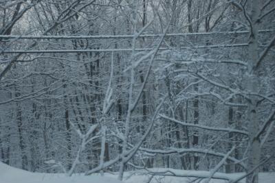 3月3日 金曜日  小雪  0℃_f0210811_08593305.jpg