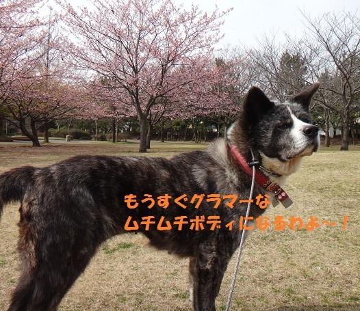 f0121712_08101348.jpg