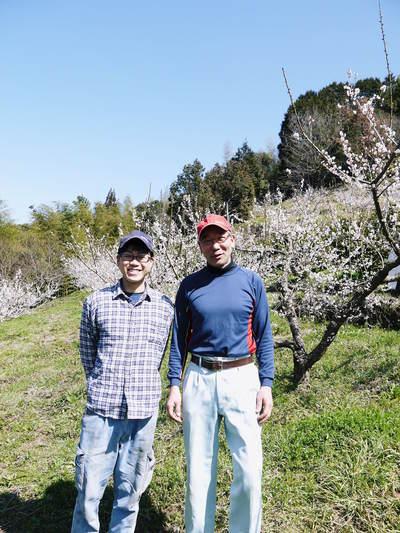 山あいの南高梅 花咲く様子!今年はかなり開花が早いんです!!_a0254656_1831830.jpg