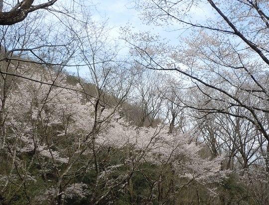 山も春を迎える準備に_b0102572_1022717.jpg