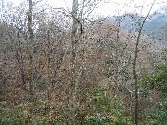 山も春を迎える準備に_b0102572_1033658.jpg