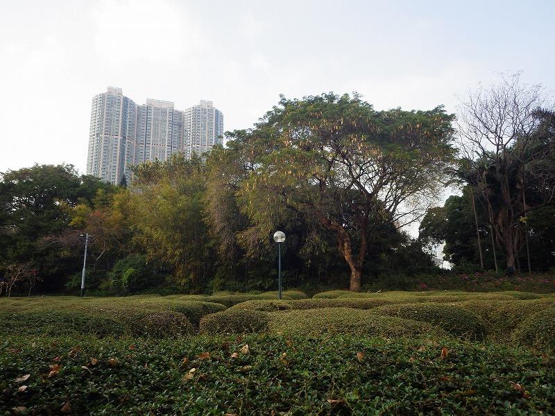 ★九龍公園でバードウォッチング 香港研修1日目 午後編_e0046474_17560256.jpg