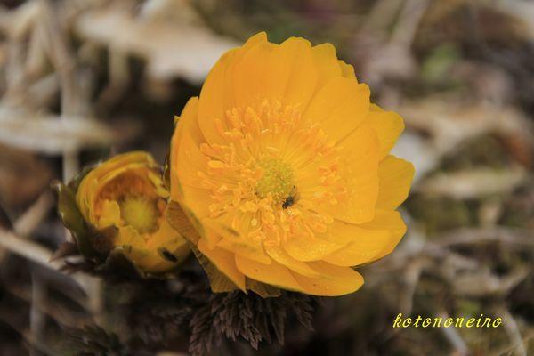 f0227200_15354623.jpg