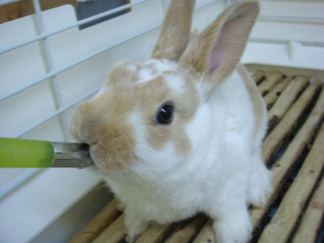 170304 ウサギ・インコ・ハムスター_f0189122_17244157.jpg