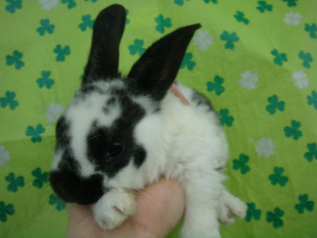 170304 ウサギ・インコ・ハムスター_f0189122_1725860.jpg