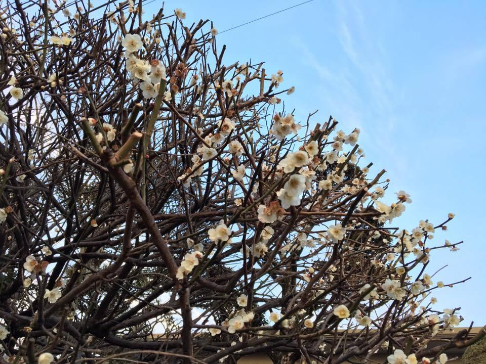 !!~春~!!_d0082356_10501073.jpg