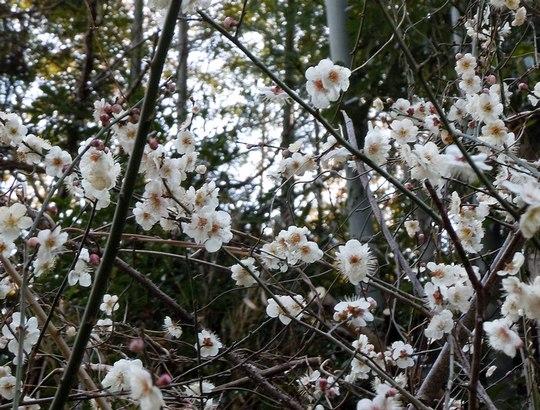 路傍の花、樹々の鳥(147) ~ 切通しを抜けたら、そこは ~ _b0102572_17502184.jpg