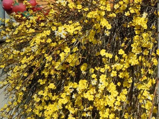 路傍の花、樹々の鳥(147) ~ 切通しを抜けたら、そこは ~ _b0102572_17504760.jpg