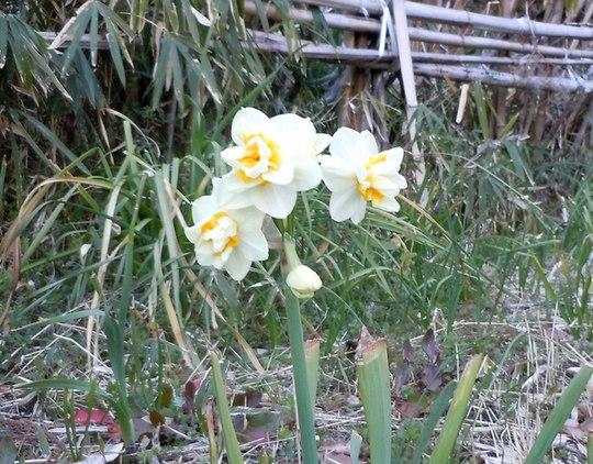 路傍の花、樹々の鳥(147) ~ 切通しを抜けたら、そこは ~ _b0102572_17505756.jpg