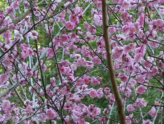 路傍の花、樹々の鳥(147) ~ 切通しを抜けたら、そこは ~ _b0102572_1750862.jpg
