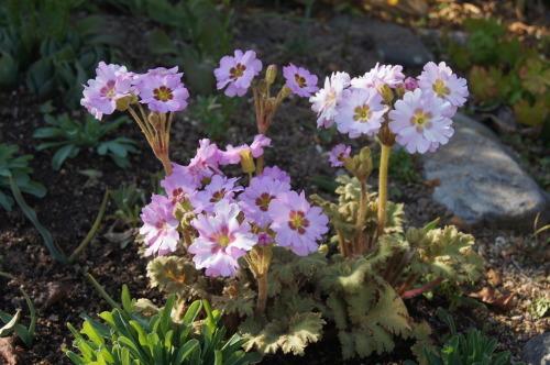 早春の庭_e0181373_21163085.jpg