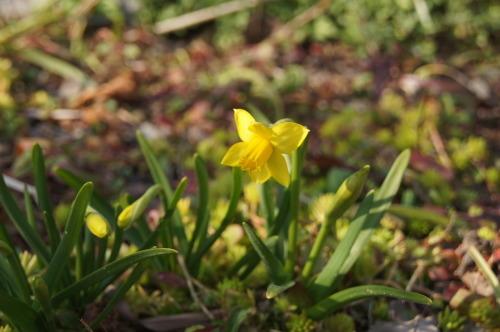 早春の庭_e0181373_21164554.jpg